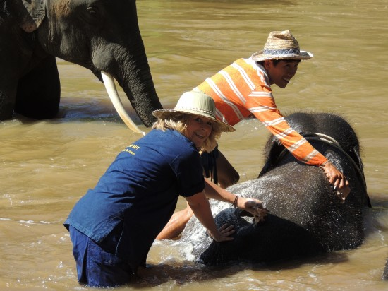 Shannon Hurst Lane at Maetang Elephant Park in Thailand bathing an elephant